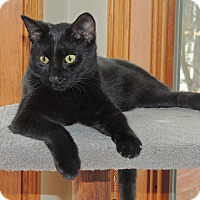 Adopt A Pet :: Wally - Manitowoc, WI