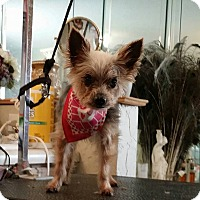 Adopt A Pet :: Bobby Sue - FORT WORTH, TX