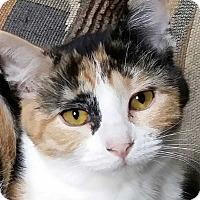 Adopt A Pet :: Bug - Brighton, MO