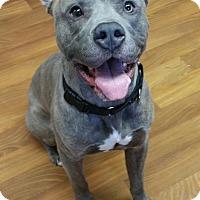 Adopt A Pet :: Apollo - Lisbon, OH