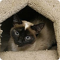 Adopt A Pet :: Lola - Memphis, TN