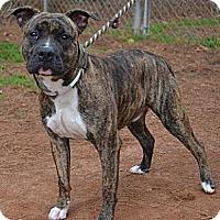 Adopt A Pet :: Rocky - Athens, GA