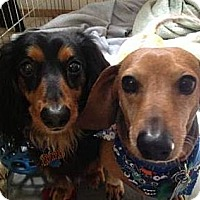 Adopt A Pet :: REGGIE AND SAMMIE - Portland, OR