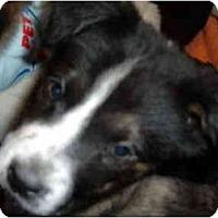 Adopt A Pet :: Charity - No.Charleston, SC