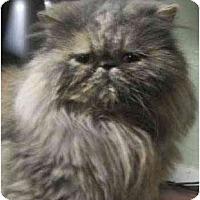 Adopt A Pet :: Kandee - Davis, CA