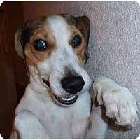 Adopt A Pet :: Bloopie - Kingwood, TX