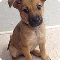 Adopt A Pet :: Sandy - North Olmsted, OH