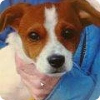 Adopt A Pet :: Freddie - Richmond, VA