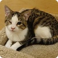 Adopt A Pet :: Ellie - McHenry, IL