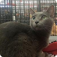 Adopt A Pet :: Malia - Harrisburg, NC