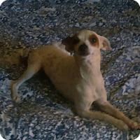 Adopt A Pet :: Speckles - Buchanan Dam, TX