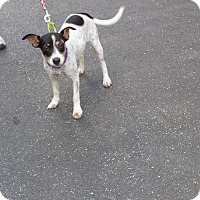Adopt A Pet :: sparkles - Jupiter, FL