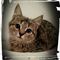 Adopt A Pet :: Ossi - Richmond, VA