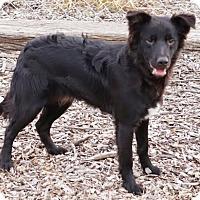 Adopt A Pet :: Rave - Toccoa, GA