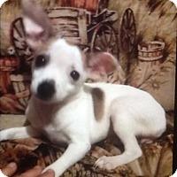 Adopt A Pet :: Minnie - springtown, TX