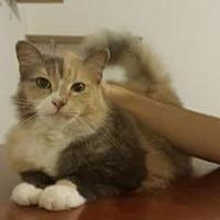 Adopt A Pet :: Kiara - Sunny Isles Beach, FL
