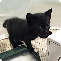 Adopt A Pet :: Atherton - Austin, TX
