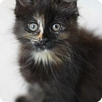 Adopt A Pet :: Charisma - Medford, NJ