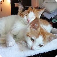 Adopt A Pet :: Lizzy & Poppy, Petite Precious Sisters - Brooklyn, NY