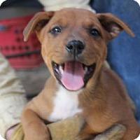 Adopt A Pet :: Kenzie - Tucson, AZ