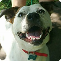 Adopt A Pet :: T-Bone - Springfield, MO