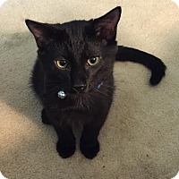 Adopt A Pet :: Blaze - Rochester Hills, MI