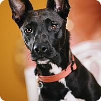 Adopt A Pet :: Ali - Portland, OR