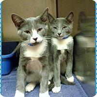 Adopt A Pet :: SCOTTIE & ROBBIE - Marietta, GA