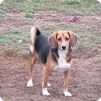 Adopt A Pet :: Vandi - Liberty Center, OH