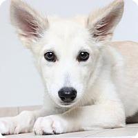 Adopt A Pet :: Albequa D161812: PENDING ADOPTION - Edina, MN