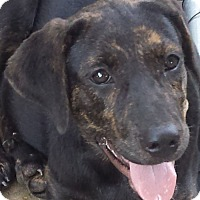Adopt A Pet :: Kenzi RIP 11-12-16 - Preston, CT