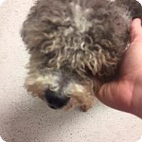 Adopt A Pet :: Maxwell - New Castle, DE