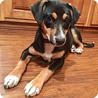 Adopt A Pet :: Sari - Lisbon, IA