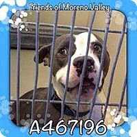 Adopt A Pet :: Berry - URGENT! Moreno Valley - San Bernardino, CA