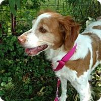 Adopt A Pet :: OH/Jules Adoption Pending - Pittsburgh, PA