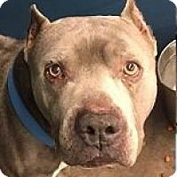 Adopt A Pet :: Sterling - Springdale, AR