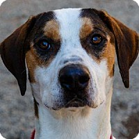 Adopt A Pet :: MOONSHINE - Decatur, GA