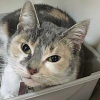 Adopt A Pet :: Ester - Saylorsburg, PA