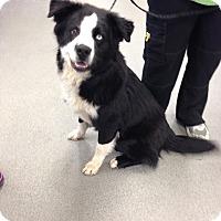 Adopt A Pet :: Tig - pending - Manchester, NH