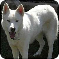 Adopt A Pet :: Aspen (and Denver) - Newbury Park, CA