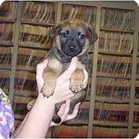 Adopt A Pet :: Dewey - Groveland, FL