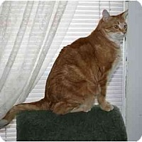 Adopt A Pet :: Renny - Manalapan, NJ