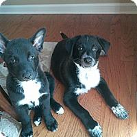 Adopt A Pet :: Maddie - Marlton, NJ