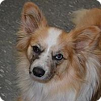 Adopt A Pet :: Grady - Russellville, KY