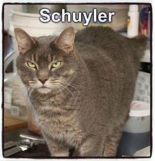 Domestic Shorthair Cat for adoption in Crandall, Georgia - Schuyler