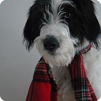 Adopt A Pet :: Stewart - Monteregie, QC