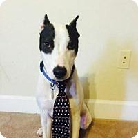 Adopt A Pet :: Baldwin - Rocky Mount, NC