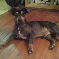 Adopt A Pet :: Randy Ragball - Beaumont, TX