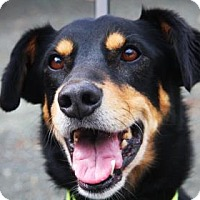 Adopt A Pet :: Oscar - Bellevue, WA