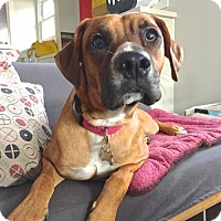 Adopt A Pet :: Melina - Los Angeles, CA